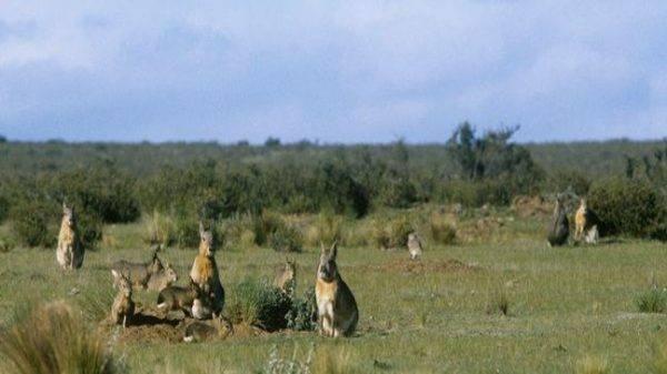 Los mamíferos de las Sierras de las Quijadas son investigados por jóvenes estudiantes