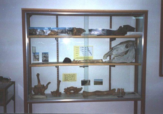 Museo de Historia Natural de la U.N.S.L.